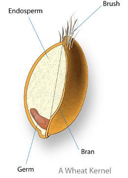 Grain Kernel